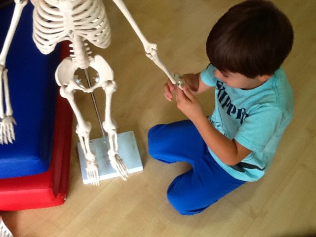 esqueleto3