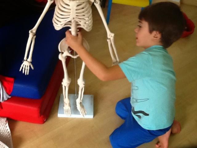 esqueleto4