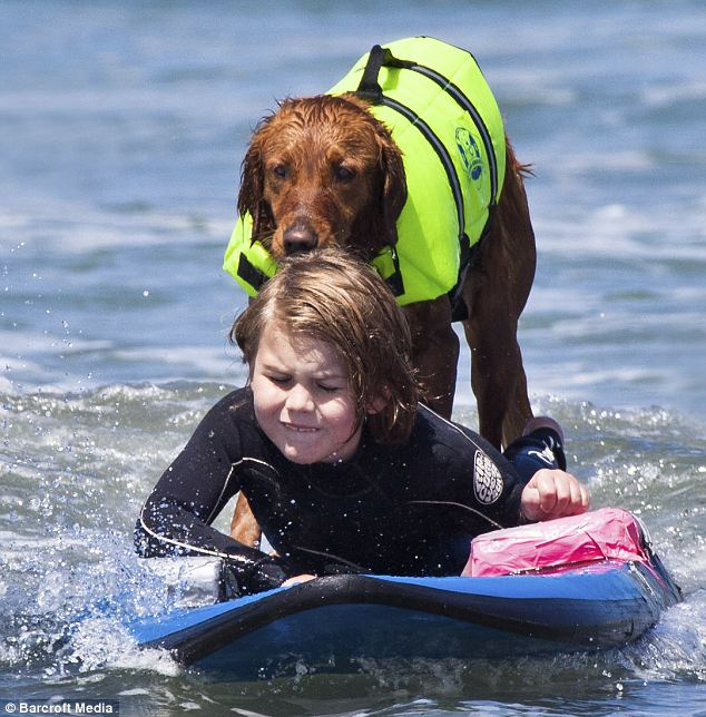 surf-dog-Ricochet