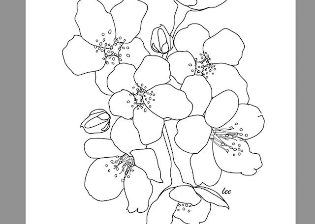 Imprima Desenhos De Colorir Gratuitamente Mandalas E Outras